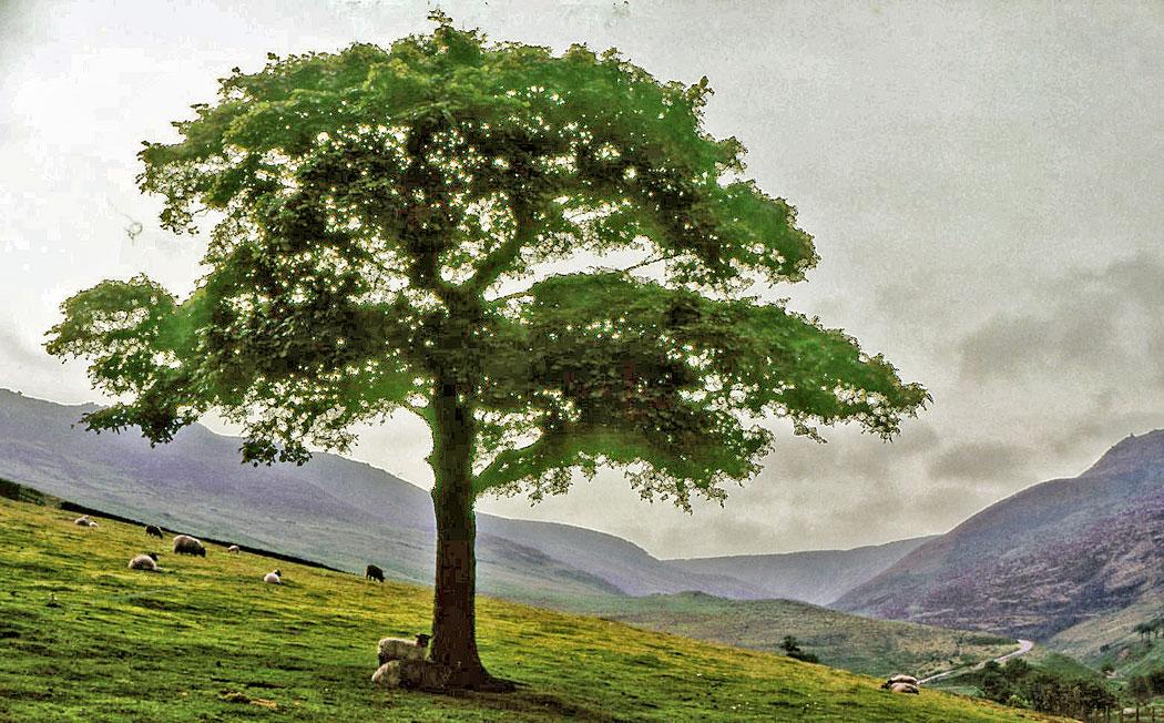 WEB-LONE-TREE